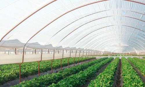 کاربرد مواد پلیمری در فیلم های کشاورزی